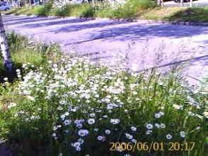 verge_flowers