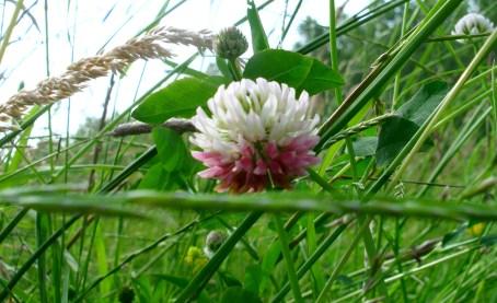 wildflower_8