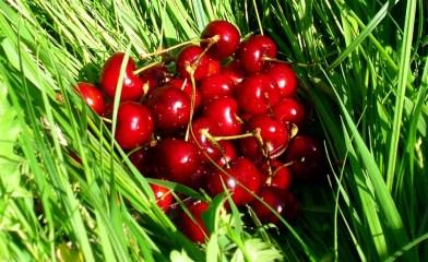 cherries_on_grass